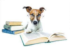 cane-addestrato