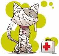 emergenzeveterinarie