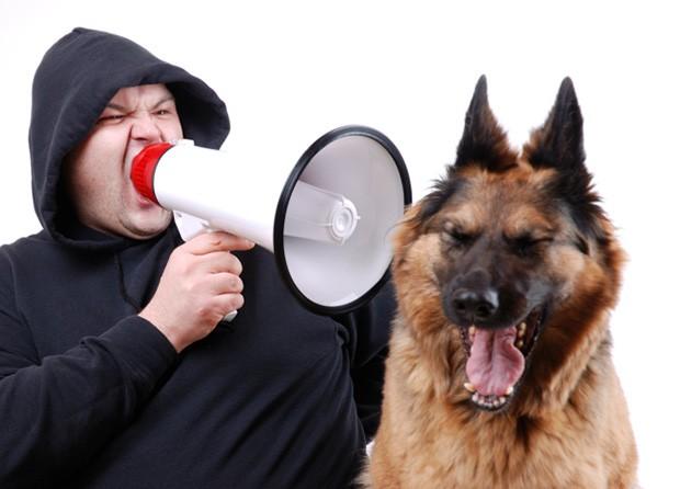 Educare il cucciolo dal primo giorno clinica veterinaria dott giancarlo casu porto torres - Educare il cane a non salire sul divano ...