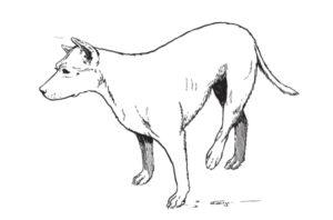 lussazione anca cane